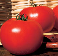 КАРТЬЕ F1 - семена томата индетерминантного, 250 семян, CLAUSE, фото 1
