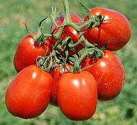 ЛИТТАНО F1 - семена томата детерминантного, 5 000 семян, CLAUSE, фото 1