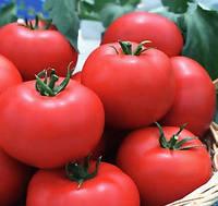 ЯГУАР F1 - семена томата индетерминатного, 500 семян, Semenis, фото 1