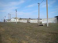 Птицеферма Одесская область, фото 1