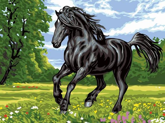 Раскраска по номерам Черный конь, фото 2