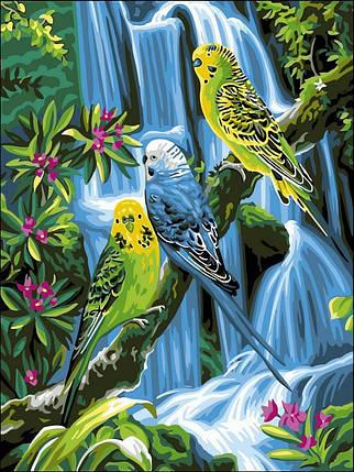 Раскраска по номерам Волнистые попугайчики, фото 2