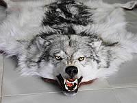 Полярный канадский волк, большая шкура волка канадского, фото 1