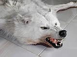 Белый полярный волк из Канады, шкуры ковры из диких животных, фото 2