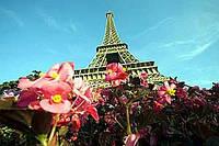 А я в Париже. Автобусный тур 6 дней.