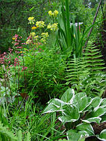 Ряд статей о прибрежных растениях