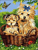Картины по номерам 30×40 см. Йорки в корзинке