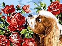 Картины по номерам 30×40 см. Кокер спаниэль и розы