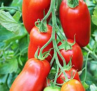 ПОЗЗАНО F1 - семена томата, Enza Zaden, фото 1