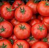 САДИН F1 - семена томата детерминантного, 500 семян, Enza Zaden