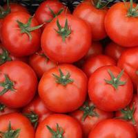 САДИН F1 - семена томата детерминантного, 500 семян, Enza Zaden, фото 1