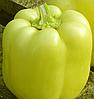 ВЕДРАНА F1 - cемена перца сладкого, 500 семян, Enza Zaden