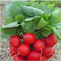 ЭСКАЛА F1 - семена редиса, 250 грамм, Enza Zaden, фото 1