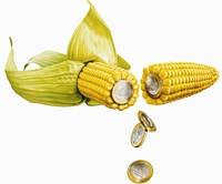 Семена кукурузы Syngenta