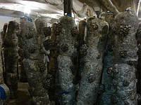 Продам отработанные грибные блоки.