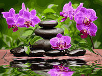 Картина по номерам 30×40 см. Лиловые орхидеи