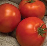 ЛИНДА F1 - семена томата, Sakata