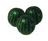 Кримстар F1 семена арбуза тип Крымсон Свит
