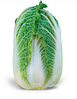 ЗЕНА F1 - семена капусты пекинской 2 500 семян, Kitano Seeds