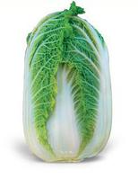 ЗЕНА F1 - семена капусты пекинской 2 500 семян, Kitano Seeds, фото 1