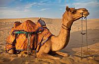 Особенности одеяла из натуральной верблюжьей шерсти