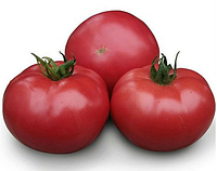 KS 38 F1 - насіння томату індетермінантного 1 000 насінин, Kitano Seeds, фото 1