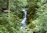 Фотообои Весенний водопад 366*254