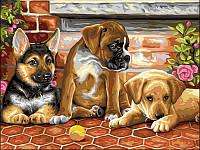 Картины по номерам 30×40 см. Три щенка и мячик