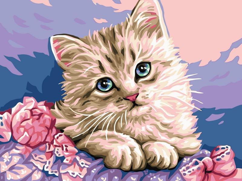 Картины по номерам 30×40 см. Милый котик