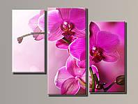 """Модульная картина на холсте из 3-х частей """"Розовая орхидея"""""""