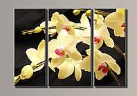 """Модульная картина на холсте из 3-х частей """"Желтая орхидея"""""""