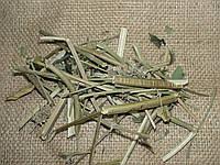 Сушеная мелисса, фото 1