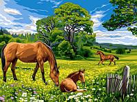 Картины по номерам 30×40 см. Солнечный луг