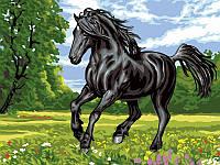 Картины по номерам 30×40 см. Черный конь