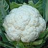 KS 27 F1 семена капусты цветной, 2 500 семян, Kitano Seeds
