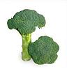 KS 355 F1 семена капусты брокколи, 2 500 семян, Kitano Seeds