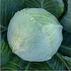 KS 60 F1 - семена капусты белокочанной, 2 500 семян, Kitano Seeds