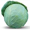 ХОНКА F1 - насіння капусти білоголової, 2 500 насіння, Kitano Seeds