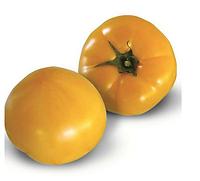 KS 10 F1 - семена томата индетерминантного, 1 000 семян, Kitano Seeds, фото 1