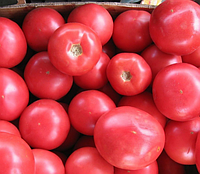 БАТЛЕР F1 - семена томата индетерминантного, 1 000 семян, Kitano Seeds, фото 1