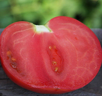 ХИТОМАКС F1 - семена томата индетерминантного, 1 000 семян, Kitano Seeds, фото 1