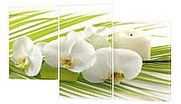 Модульная картина 286 орхидеи