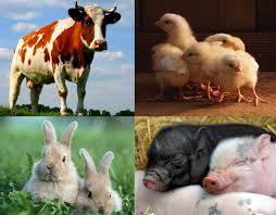 Добавки кормовые для животноводства