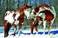 """Картина на стекле """"Вeautiful horse"""""""