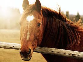 "Картина на стекле ""Лошадь"""