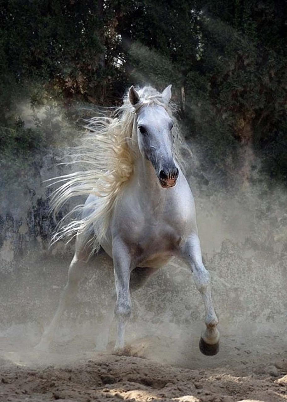 "Картина на стекле "" Аmazing horses"""