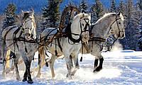 """Картина на стекле """"Тройка белых лошадей"""""""