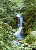 Фотообои Водопад в лесу 183*254