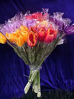 Тюльпан  один на ноге ( 50 шт), фото 1