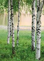 Фотообои Северный лес 183*254